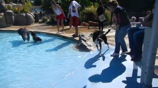 DOG POOL DAY Great Waves Waterpark Alexandria Virginia