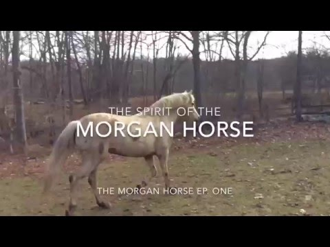 the Spirit of the Morgan Horse