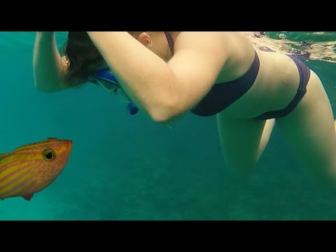 SNORKELING VACATION in CARIBBEAN TROPICAL ISLAND! VACACIONES de BUCEO ISLA TROPICAL del CARIBE!