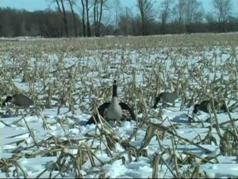 Canada Goose vest sale fake - Wing Flapping and Moving Goose Decoy. Wing Waver Decoys - YouTube