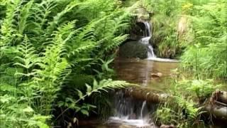 Typy siedliskowe lasów - Bory i lasy mieszane