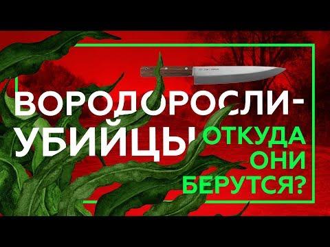 ПОЧЕМУ УМИРАЮТ РЕКИ | Русское Черноземье