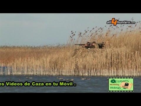 Caccia ad anatre e oche in Ungheria, Lugari Video