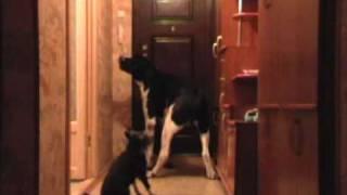 видео охрана квартир