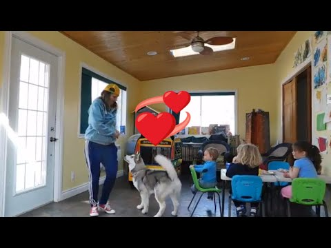 Alaskan Malamute Puppy Freestyle Dog Dancing Training