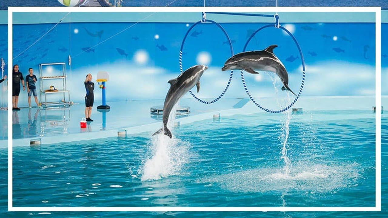Cá heo biểu diễn xiếc tuyệt vời - Khám phá Tuần Châu Hà Nội BaaraLand   Bông Bống TV