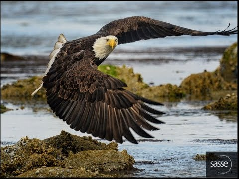 4/4/2018 - Eagle And Raptor News - Noon  PST / 3 Pm EST