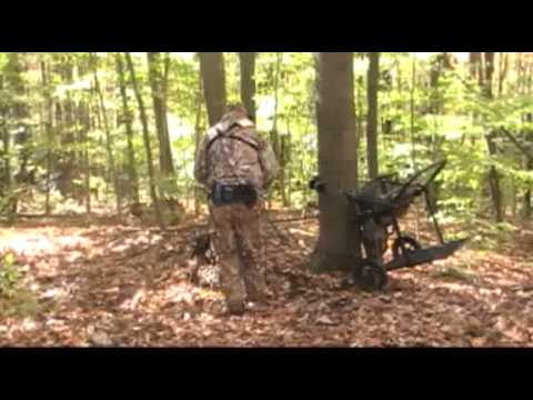The TreeRider