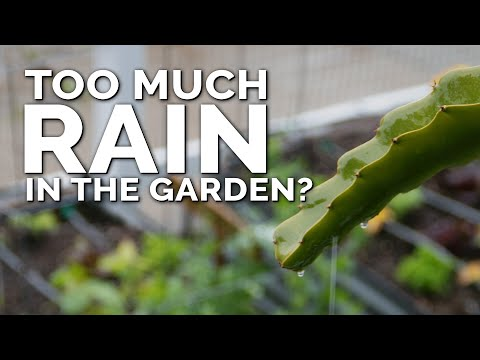5-tips-to-save-your-vegetable-garden-after-too-much-rain