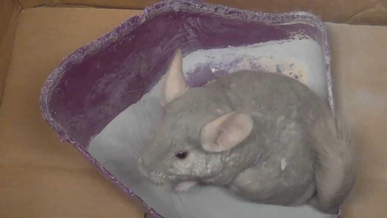 Chinchilla Dust Bath a...