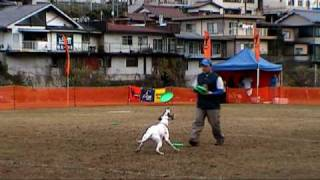 "English Pointer""RAY""& SATOMI."