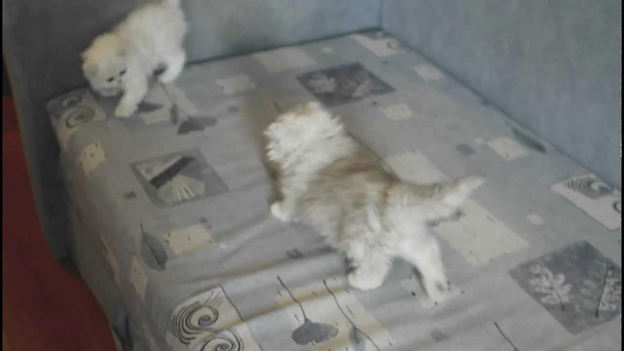 Мягкая игрушка Aurora Кошка персидская 25 см 11-444/11-454 - YouTube