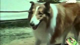 Lassie - Sigla (Dolce Lassie)