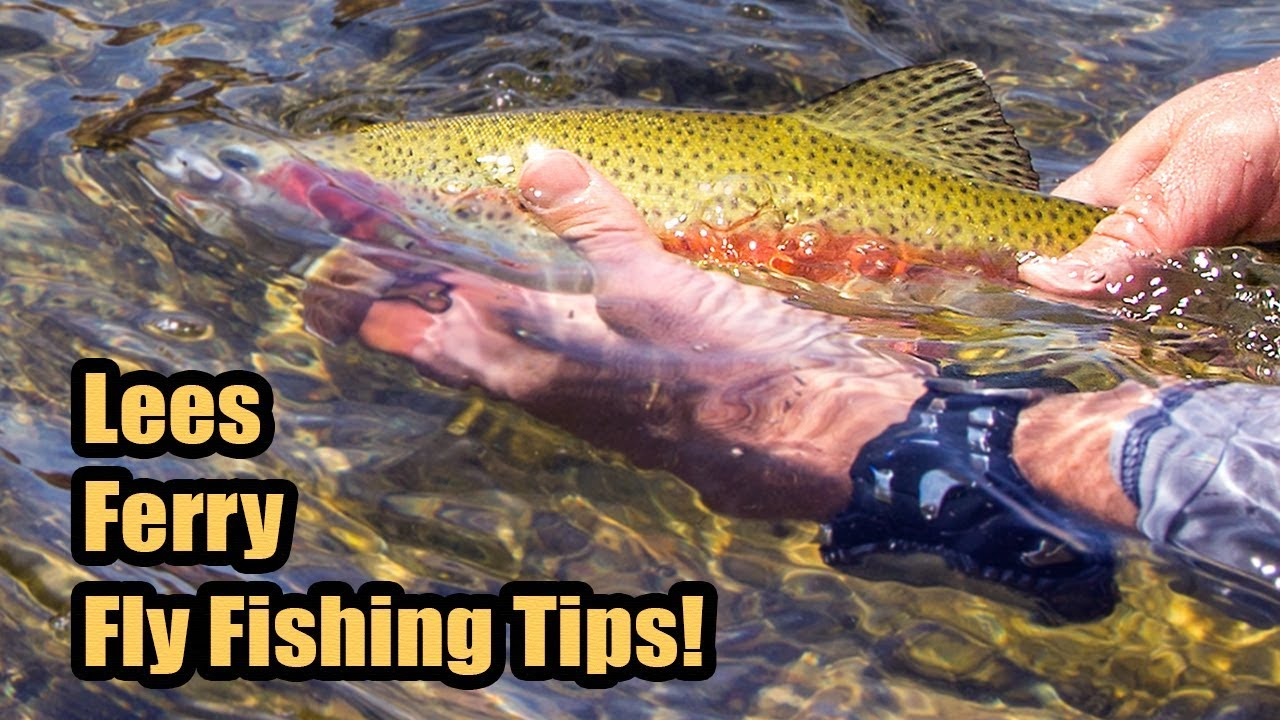 Tips for fly fishing the lees ferry az walk in area for Lees ferry fishing report