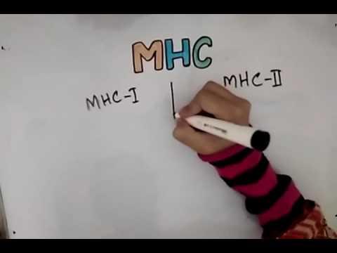 MHC Complex