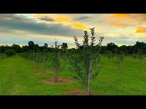 Planting 250 Apple Trees!