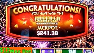 Wonder 4 Buffalo Gold Slot Machine BUFFALO JACKPOT WON $12 Max BET | Live Slot Play