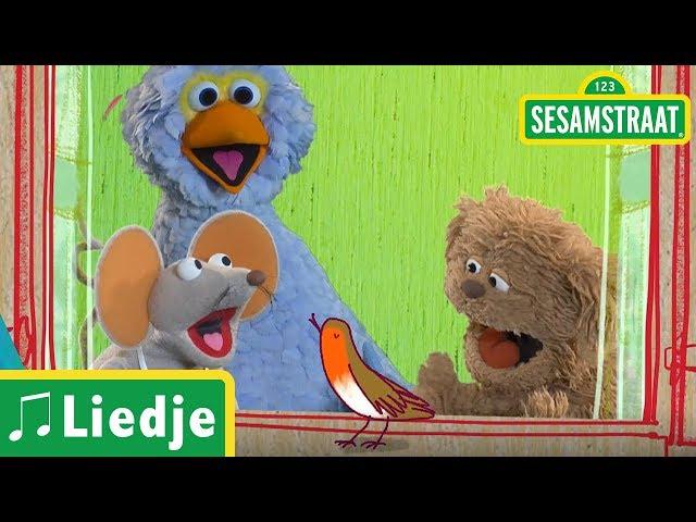 Roodborstje tikt tegen 't raam - Kinderliedje - Sesamstraat
