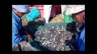 Accidental Presence Of Crayfish In Fish Ponds In Egypt