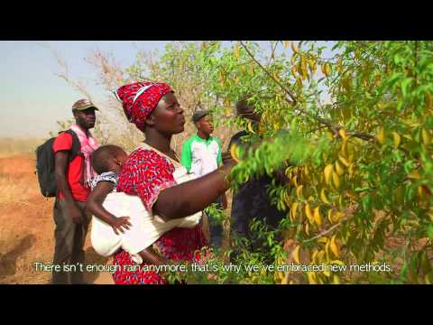 Green Treasure of the Sahel (short version)