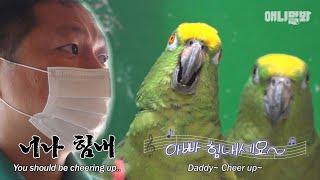 세상에서 제일 웃긴 앵무새 영상 (혼자보기 아까워서 풉니다)ㅣ Parrot Renders Sorrow In …