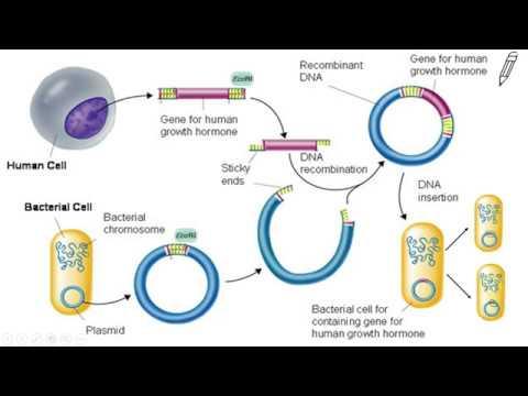 Gene splicing recombinant dna youtube gene splicing recombinant dna ccuart Images