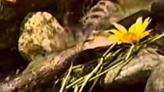 Culto a los Orishas Oshun parte 1 Botanica Ile Orunmila