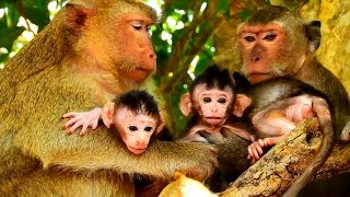 Poor Barbi So Angry Julina On Him, All So Amazing Baby Monkeys Lovely!