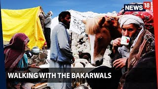 Walking With the Bakarwals | Through Jammu and Kashmir with the nomads | News18 Originals