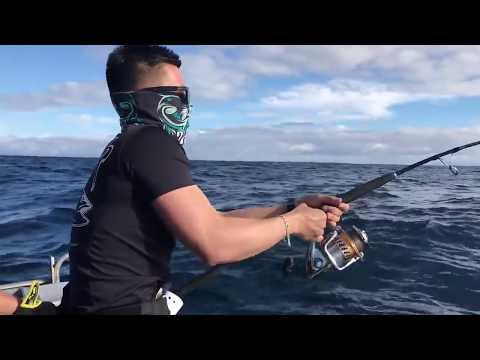 Live baiting for Kingfish in Coromandel NZ with Epic adventures   Captain Owen