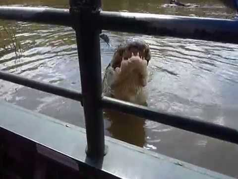 Brutus 14' Alligator, New Orleans