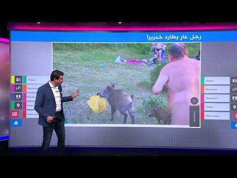 لماذا طارد رجل عار خنزيرا بريا في ألمانيا؟