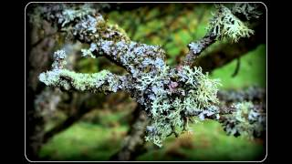 Liking lichen (and fungus, fern, moss...) (1)