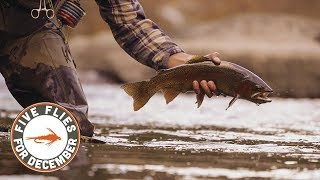 Five Flies for December 2018 - Fly Fishing Cheesman Canyon