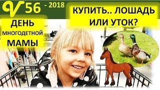Магазин в Америке. Как купить утят? Будни многодетной семьи Савченко