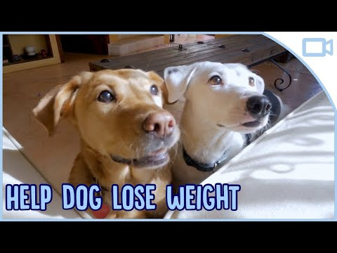 How To Help My Dog Lose Weight!