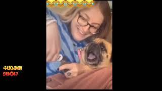 Смешные видео с животными