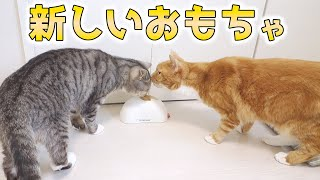 cute cats playing new toy