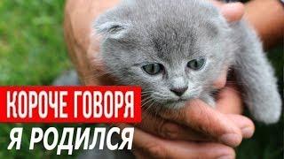 КОРОЧЕ ГОВОРЯ Я РОДИЛСЯ (котёнок от первого лица) История одной жизни