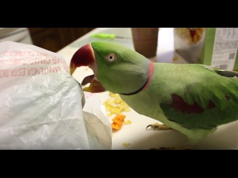 Cooking with Parrots is a Nightmare!