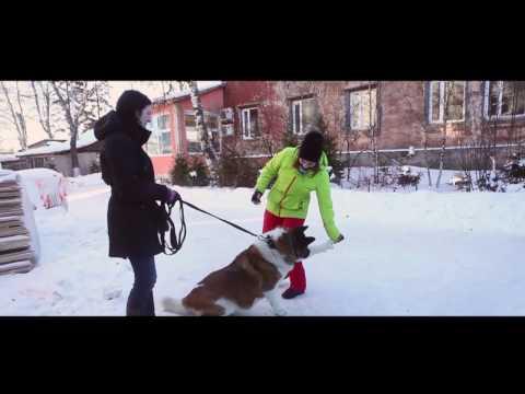 Собаки и кошки в добрые руки Приюты в Москве