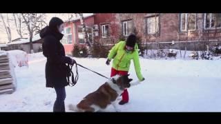 Что нужно знать тем, кто хочет взять собаку из приюта?