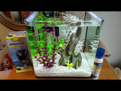 Treating Betta Fin Rot: Aquarium Salt & Stress Coat