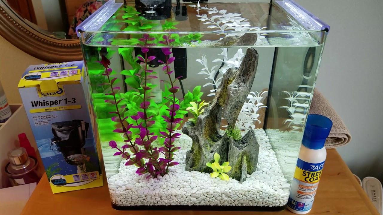 Treating Betta Fin Rot Aquarium Salt Stress Coat