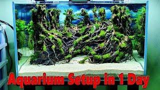 Aquarium Setup in 1 Day - Jungle Layout - No CO2 Cylinder