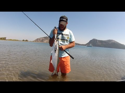 Fishing with DUO #57: Bluefish on Realis Pencil 110