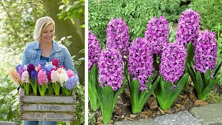 How to plant Bedding Hyacinths: Jeff Turner plants a mix of fragrant Hyacinth bulbs in the border