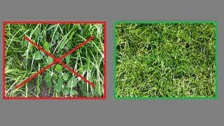 Kein Unkraut mehr im Rasen - Unkraut im Rasen entfernen ohne dem Rasen zu schaden