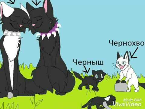 Коты воители дети бича - YouTube