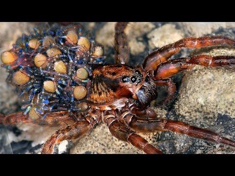 12 Dangerous Spiders